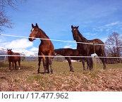 Купить «Horses in a meadow», фото № 17477962, снято 23 марта 2019 г. (c) easy Fotostock / Фотобанк Лори