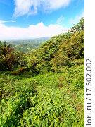 Купить «Puerto Rico Forest», фото № 17502002, снято 23 марта 2019 г. (c) easy Fotostock / Фотобанк Лори