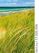 Купить «Sand dunes at beach», фото № 17505934, снято 5 апреля 2020 г. (c) easy Fotostock / Фотобанк Лори