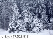 Купить «Snow covered winter landscape», фото № 17529818, снято 17 июня 2019 г. (c) PantherMedia / Фотобанк Лори