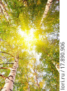 tree crowns on sunlight blue sky. Стоковое фото, фотограф Leonid / easy Fotostock / Фотобанк Лори