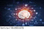 Купить «Digital human brain», иллюстрация № 18093670 (c) Sergey Nivens / Фотобанк Лори