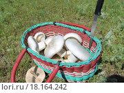 Грибы в корзинке. Стоковое фото, фотограф Елена Чегодаева / Фотобанк Лори