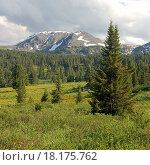 Альпийские луга летом в горах Алтая (2005 год). Стоковое фото, фотограф Сергей Серебряков / Фотобанк Лори