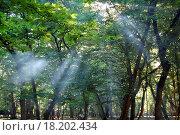 Купить «Forest», фото № 18202434, снято 22 июля 2019 г. (c) easy Fotostock / Фотобанк Лори