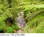 Купить «Forest creek in lush rainforest jungle of NZ», фото № 18276446, снято 19 сентября 2018 г. (c) easy Fotostock / Фотобанк Лори