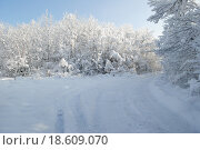 Зима в лесу. Стоковое фото, фотограф Марина Остапенко / Фотобанк Лори