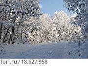 Зима в лесу, пейзаж. Стоковое фото, фотограф Марина Остапенко / Фотобанк Лори