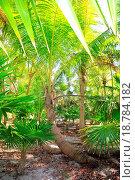 Купить «Palm tree and chit jungle on caribbean beach area», фото № 18784182, снято 16 февраля 2019 г. (c) easy Fotostock / Фотобанк Лори