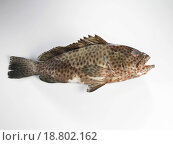 Купить «Fish», фото № 18802162, снято 20 января 2019 г. (c) easy Fotostock / Фотобанк Лори