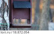 Купить «Кормушка для птиц в парке весной», видеоролик № 18872054, снято 13 декабря 2015 г. (c) Светлана Промысловская / Фотобанк Лори