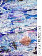 Купить «Ракушка на нарисованном берегу», фото № 18922322, снято 12 ноября 2014 г. (c) Elizaveta Kharicheva / Фотобанк Лори