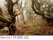 Купить «Virgin mountain rainforest of Marlborough, NZ», фото № 19005122, снято 15 ноября 2018 г. (c) easy Fotostock / Фотобанк Лори
