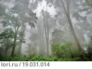 Купить «Mist veiled foliage ; Lulagaon ; West Bengal ; India», фото № 19031014, снято 10 апреля 2020 г. (c) easy Fotostock / Фотобанк Лори