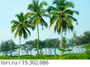 Тропический пейзаж с пальмами на фоне голубого неба. Стоковое фото, фотограф Наталья Богуцкая / Фотобанк Лори