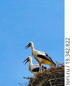 Купить «Storks in the nest, Poland.», фото № 19342822, снято 30 августа 2013 г. (c) easy Fotostock / Фотобанк Лори