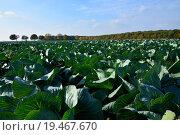 Купить «food nutrition field vegetable agriculture», фото № 19467670, снято 25 июня 2019 г. (c) PantherMedia / Фотобанк Лори