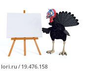 Купить «Silly toon turkey looking at blank sign.», фото № 19476158, снято 16 июля 2019 г. (c) PantherMedia / Фотобанк Лори