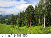Купить «Beautiful forest in the Altai Mountains. Summer landscape.», фото № 19988450, снято 17 марта 2018 г. (c) easy Fotostock / Фотобанк Лори