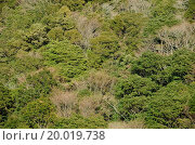 Купить «Forest canopy as seen from above», фото № 20019738, снято 16 июня 2019 г. (c) easy Fotostock / Фотобанк Лори