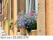 Купить «Flowers in the window of a house», фото № 20065070, снято 16 декабря 2019 г. (c) easy Fotostock / Фотобанк Лори