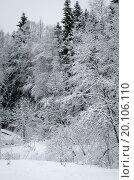 Красивые пейзажи снежного леса. Стоковое фото, фотограф Екатерина Ветошкина / Фотобанк Лори