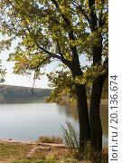 Купить «Осенний пейзаж. Дуб на берегу пруда», эксклюзивное фото № 20136674, снято 23 сентября 2015 г. (c) Игорь Низов / Фотобанк Лори