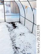 Купить «Снег разбросанный на почву для увлажнения в теплице из поликарбоната», фото № 20232978, снято 13 января 2016 г. (c) Евгений Мухортов / Фотобанк Лори