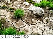 Трава растет на потрескавшейся замле. Стоковое фото, фотограф Алексей Грим / Фотобанк Лори