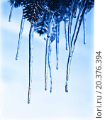 Купить «Icicles on the tree branch, blue frozen water, winter ice, weather outdoor at wintertime season», фото № 20376394, снято 7 февраля 2010 г. (c) easy Fotostock / Фотобанк Лори
