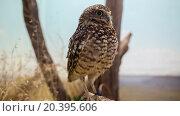 Купить «Beautiful owl sits on branch and blinks in aviary at zoo.», фото № 20395606, снято 28 августа 2014 г. (c) Losevsky Pavel / Фотобанк Лори