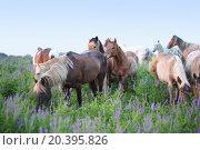 Купить «Herd of horses grazing in green field», фото № 20395826, снято 8 июня 2014 г. (c) Losevsky Pavel / Фотобанк Лори