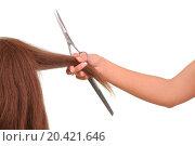 Купить «hairdresser cutting young woman with long brown hair», фото № 20421646, снято 19 января 2020 г. (c) easy Fotostock / Фотобанк Лори