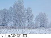 Купить «Зимний пейзаж с березовой рощей покрытой инеем в морозный день», фото № 20431578, снято 8 января 2016 г. (c) Николай Винокуров / Фотобанк Лори