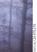 Купить «Nature Misty Forest Landscape», фото № 20478278, снято 22 июля 2019 г. (c) PantherMedia / Фотобанк Лори