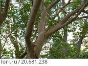 Голое дерево. Стоковое фото, фотограф Александр Лещинский / Фотобанк Лори