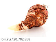 Купить «Amaryllis flowr bulb», фото № 20702838, снято 31 мая 2020 г. (c) easy Fotostock / Фотобанк Лори