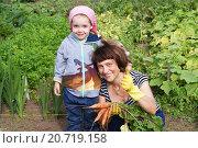 Купить «Морковь-прелесть! Бабушка и внучка на даче», фото № 20719158, снято 24 июля 2015 г. (c) Александр Мишкин / Фотобанк Лори