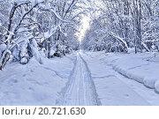Купить «Заснеженные деревья склоняются под тяжестью снега», фото № 20721630, снято 5 января 2016 г. (c) Евгений Ткачёв / Фотобанк Лори