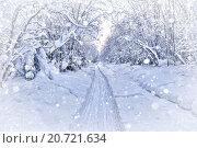 Заснеженные деревья склоняются под тяжестью снега. Стоковое фото, фотограф Евгений Ткачёв / Фотобанк Лори