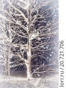Купить «Мистическое светящееся дерево в ночном зимнем лесу», фото № 20721706, снято 4 января 2015 г. (c) Евгений Ткачёв / Фотобанк Лори