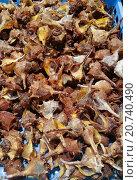 Купить «Spiny dye-murex,», фото № 20740490, снято 15 ноября 2014 г. (c) age Fotostock / Фотобанк Лори