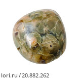 Купить «Green Rhyolite (Rainforest Jasper) gemstone», фото № 20882262, снято 4 июня 2020 г. (c) PantherMedia / Фотобанк Лори