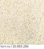 Купить «white short-grain Italica rice», фото № 20883286, снято 23 июля 2019 г. (c) PantherMedia / Фотобанк Лори