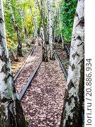 Купить «Schoeneberger Suedgelaende Nature Park», фото № 20886934, снято 22 мая 2019 г. (c) PantherMedia / Фотобанк Лори