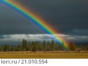 Купить «Rainbow over the Hat Creek Valley, Shasta County, California.», фото № 21010554, снято 6 ноября 2009 г. (c) age Fotostock / Фотобанк Лори