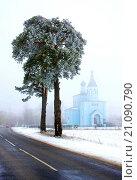 Две сосны у дороги на фоне церкви. Стоковое фото, фотограф Андрей Силивончик / Фотобанк Лори