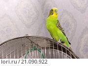 Попугай на клетке. Стоковое фото, фотограф Анастасия Колганова / Фотобанк Лори