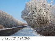 Зимняя дорога. Стоковое фото, фотограф Себелева Марина / Фотобанк Лори