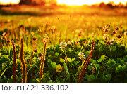 Луг. Стоковое фото, фотограф Владимир Молочев / Фотобанк Лори